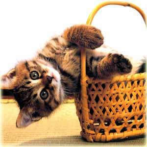 Открытки с котятами
